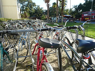 Many students use bicycles to get around the 7000-acre campus.