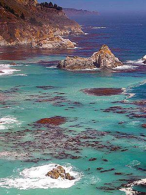 Big Sur - Big Sur: rocky coast, fog and giant kelp.