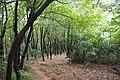 Binhu, Wuxi, Jiangsu, China - panoramio (47).jpg