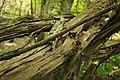 Biotopo inghiaie-natura morta2.jpg
