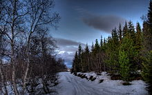 Birches, Spruces and Pines (3141588993).jpg