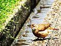 Bird in Brazil by Augusto Janiski Junior - Flickr - AUGUSTO JANISKI JUNIOR.jpg