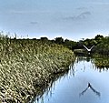 Bird in the Everglades.jpg
