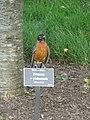 Bird on panel of label Prunus.jpg