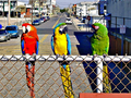 Birds rgb.png