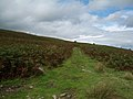 Blorenge, track leading to the cairn to the east of the summit - geograph.org.uk - 925987.jpg