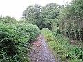 Bluebell Lane Bridleway - geograph.org.uk - 1415473.jpg