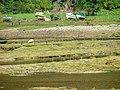 Boats Herons and Sheep - geograph.org.uk - 233606.jpg