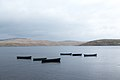 Boats on Daer Reservoir - panoramio.jpg