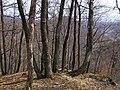 Bokšovský les - panoramio.jpg
