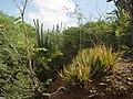 Bonaire 038 (2085260798).jpg