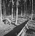 Bosbewerking, arbeiders, boomstammen, gereedschappen, zagen, Bestanddeelnr 251-9993.jpg