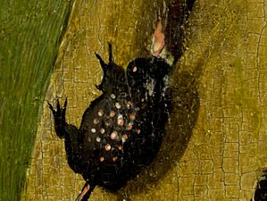 Bosch, Hieronymus - The Garden of Earthly Delights, right panel - Detail Beetle.jpg