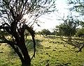 Bosque Río Queguay 01.JPG