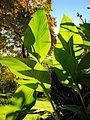 Botanička bašta Jevremovac, Beograd - jesenje boje, svetlost i senke 22.jpg