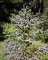 Botanic7.jpg