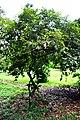 Botanic garden limbe17.jpg