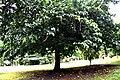 Botanic garden limbe51.jpg