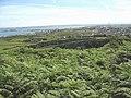 Bracken infested eastern slope of Holyhead Mountain - geograph.org.uk - 895803.jpg