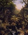 Brazilian Forest.jpg