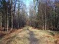Brereton Hayes Wood - geograph.org.uk - 682639.jpg