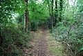Bridleway through trees near Magpie Bottom - geograph.org.uk - 940911.jpg