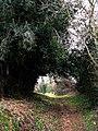 Brier Lane - geograph.org.uk - 708930.jpg