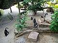 Brillenpinguine (Zoo Leipzig).jpg