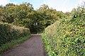 Broadhembury, woods at Kentis Moor - geograph.org.uk - 74180.jpg