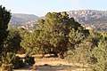 Bsaira District, Jordan - panoramio (64).jpg