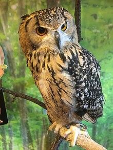 single treffen owl note call forwarding