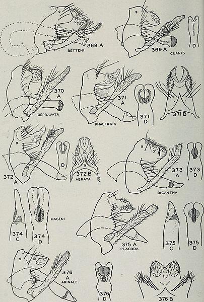 File:Bulletin (1944) (19805767174).jpg