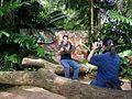 Burmese Python - Singapore Zoological Gardens (4620746424).jpg