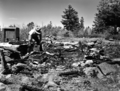 Burned down radio shack at Lava Point, lightning strike. ; ZION Museum and Archives Image ZION 8657 ; ZION 8657 (0d8ff5cdd0934511944ee7dfd3829b63).tif
