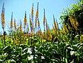 Butchart Gardens - Victoria, British Columbia, Canada (29067517252).jpg