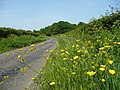 Buttercups by Staplewood Lane - geograph.org.uk - 811825.jpg