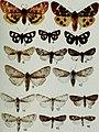 Butterflies and moths of Newfoundland and Labrador - the macrolepidoptera (1980) (20502224532).jpg