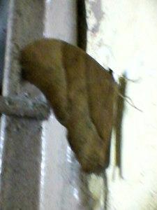 Butterfly0129.jpg