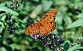 Butterfly X9.jpg