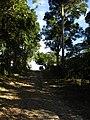 CAMINO AL ARROYO PEGELAGARTO - panoramio.jpg