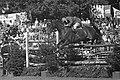 CHIO te Rotterdam, Herman Schridde op Ilona (Duitsland), Bestanddeelnr 914-2467.jpg
