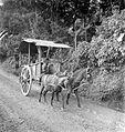 COLLECTIE TROPENMUSEUM Kar met een span paarden ervoor Bandung West-Java TMnr 10013827.jpg