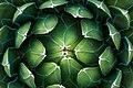 Cactus (68727349).jpeg