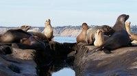 File:California sea lion colony in La Jolla (70538).webm