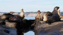 File:California sea lion colony in La Jolla (70538).webm