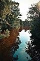 Caminho da água - Bosque da Barra.jpg