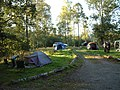 Camping in Pull Woods - geograph.org.uk - 42212.jpg