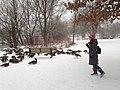 Canada Geese (28030003978).jpg