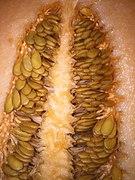 Krankheit trypophobia Trypophobia krankheit