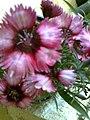 Carnation flowers.jpg